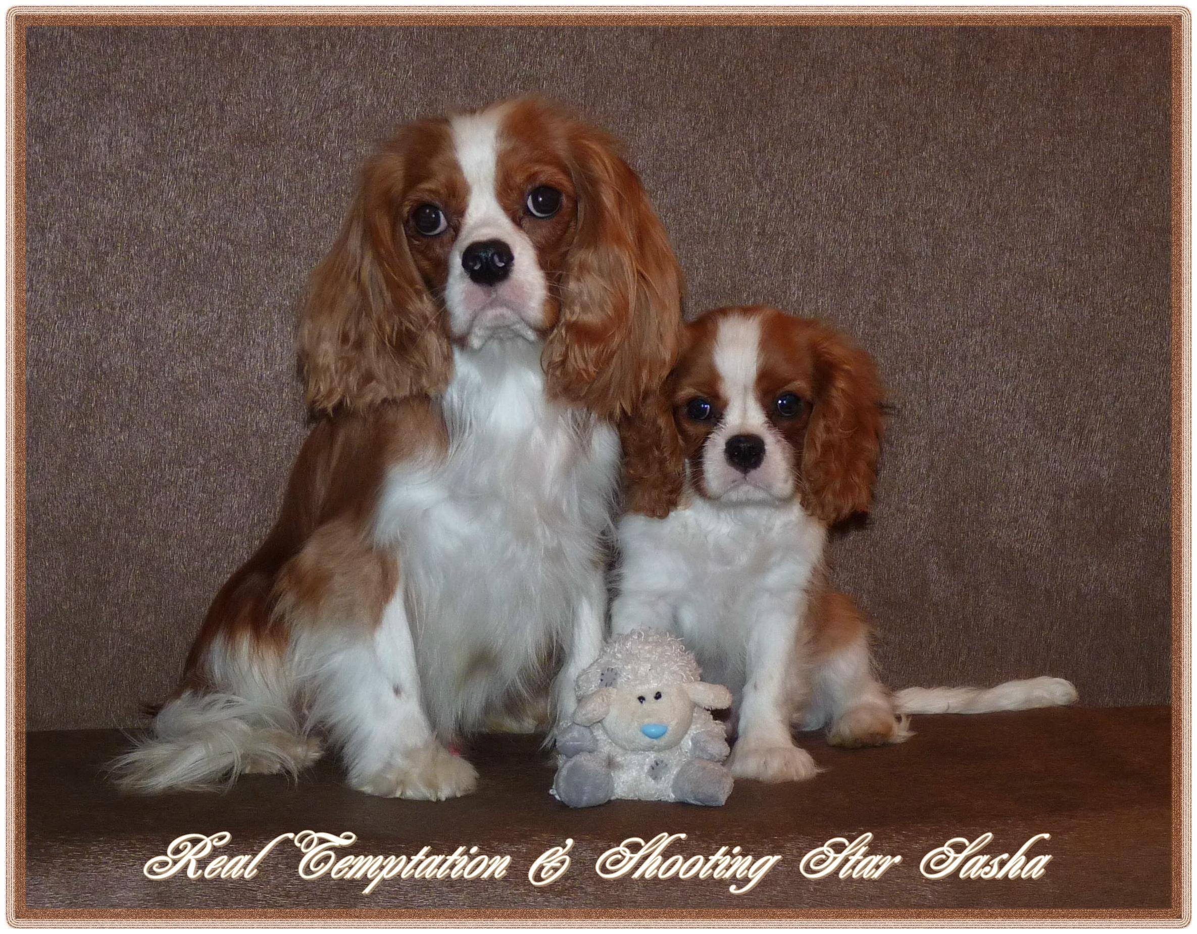 241. Teddy & Sasha